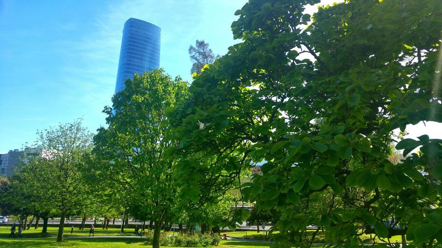Green Postcard Nature Tree City Building Exterior Travel Destinations Spring Springtime Architecture Bilbao Beauty In Nature Close-up Branch Deusto Leaves Green Color Outdoor Outdoors Backgrounds Background City Tree Sky Architecture