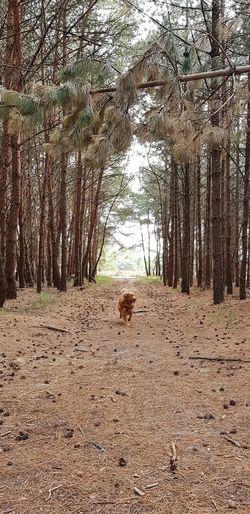 Forestwalk Fallen Tree LINE Path Dog Wandering Tree Pets Sky