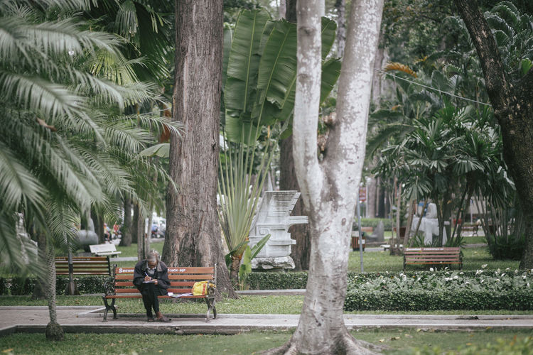 Bench Chilling Day Green Color Growing Growth Idyllic Nature Outdoors Palm Tree Park Park - Man Made Space Plant Read Reading Relaxing Streetphotography Tourism Tree