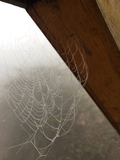 Absence Close-up Complexity Day Focus On Foreground Fragility Intricacy Natural Pattern Nature No People Outdoors Pattern Selective Focus Spider Web Still Life String Vulnerability  White Color Wood - Material