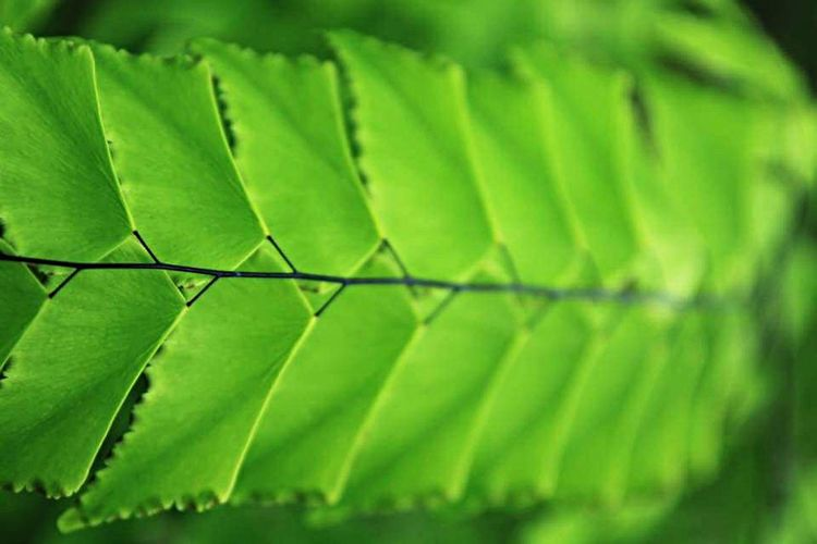Pattern Pieces Plants 🌱 Plants Green Green Color GREEN IS GOOD Orchid Farm Thailand Herbarium Pattern Symmetry Symmetrical