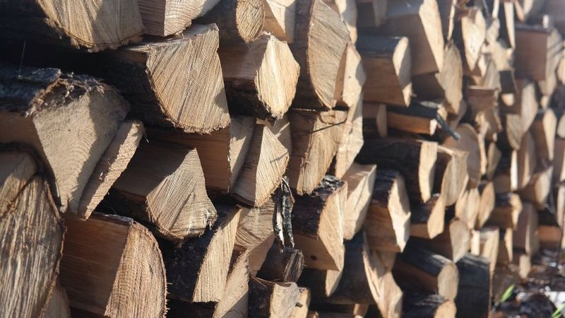 Wood Forest Stack Nature