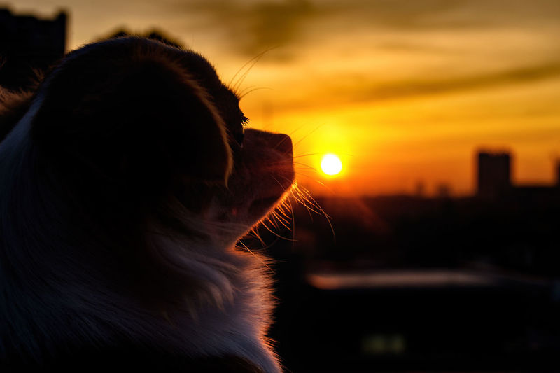 Close-up of person looking away against sky during sunset