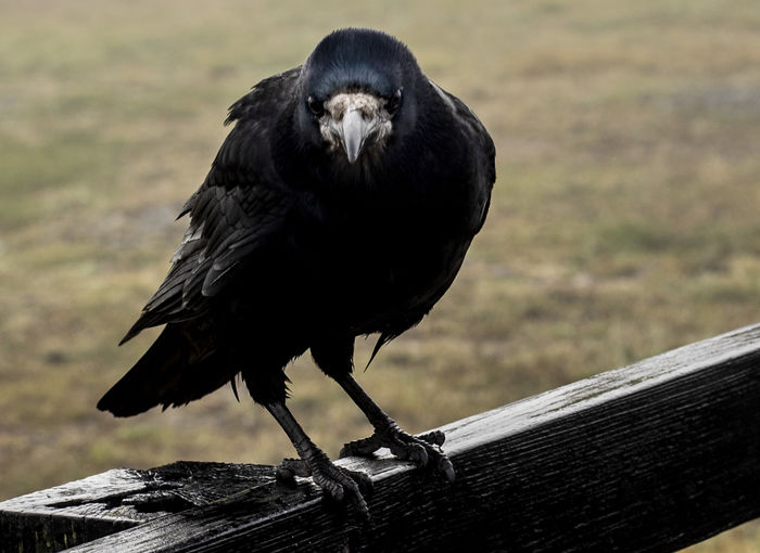 Wet Bird Animal