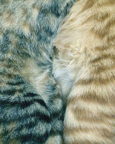 Textured  No People Close-up Indoors  Nature Cat♡ Cats Cat Fur