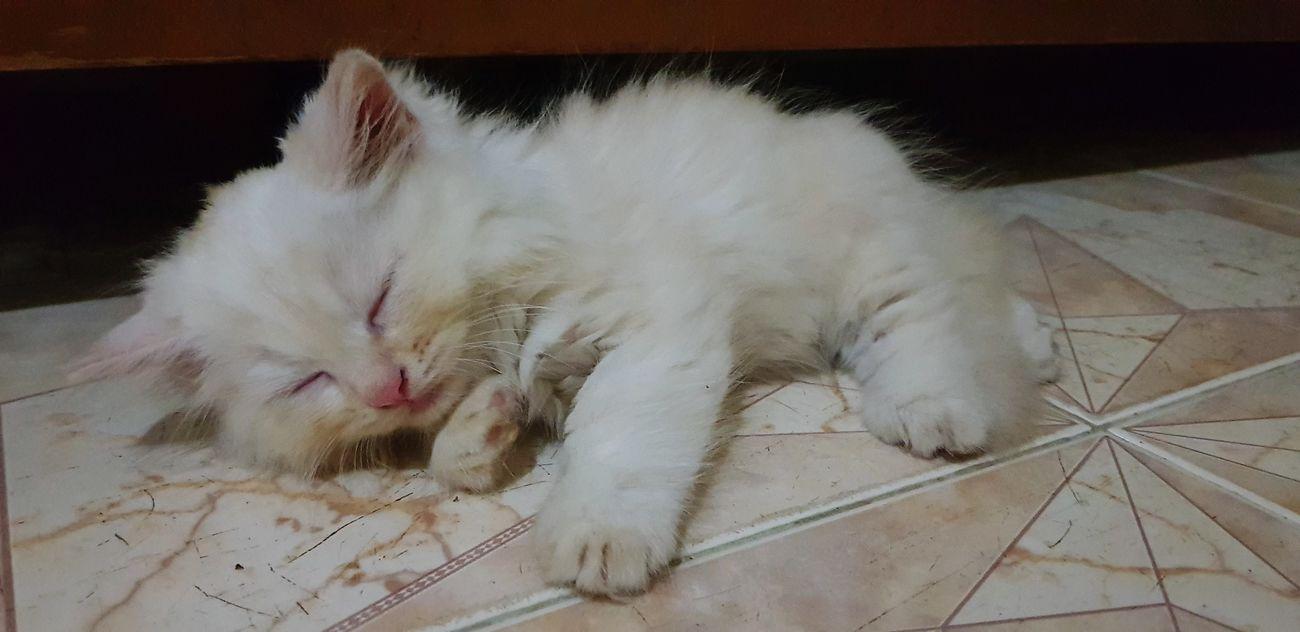 tớ là Lip này Pets Feline Domestic Cat Close-up