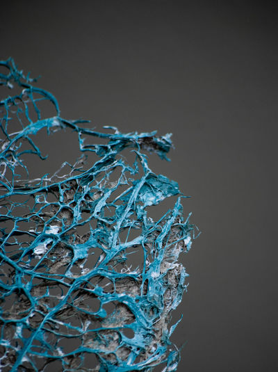 blue art - close up Macro Photography Objects Textured  Art Black Background Blue Close-up Complexity Copy Space Dead Plant Detail Details Dry Fragility Indoors  Macro No People Object Pattern Selective Focus Still Life Structure Studio Shot Surface Vulnerability