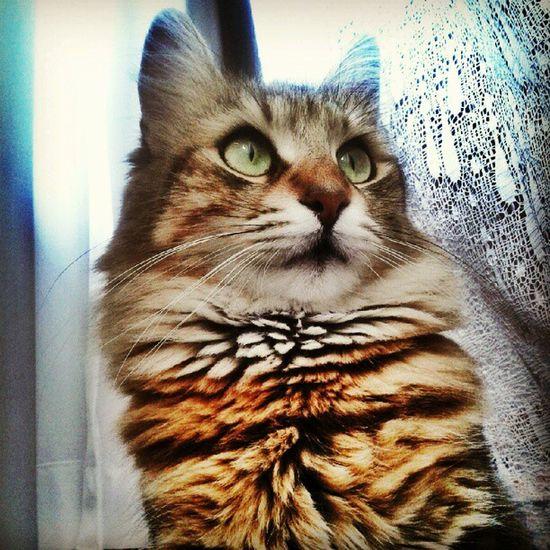 Pettaksi , Catsofinstagram , Petsofinstagram , Instacat , cats, pets, 50likes, pussycat, idkwhatothertagishoulduse, bestof, petstagram, missingcandy, bojangles, kitty, castagram, cat, meow, jj, gato, kitten, neko, beautiful, cute, love, sweet, random, catlover, funny