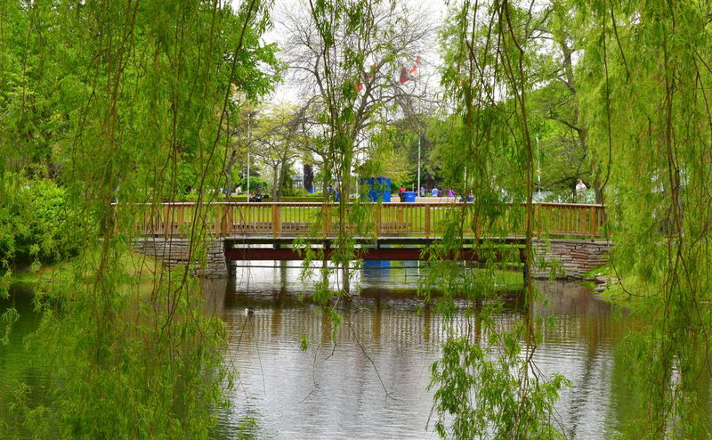 """And in a world of people, there's only you and I"" (Andy Gibb) Avenue Of The Island Beauty In Nature Bridge Bridge - Man Made Structure Calm Connection Footbridge Lake Nature Non-urban Scene Park Pier Pond Reflection Scenics Standing Water Toronto Islands Tourism Tranquil Scene Tranquility Travel Destinations Tree Tree Trunk Water Waterfront"