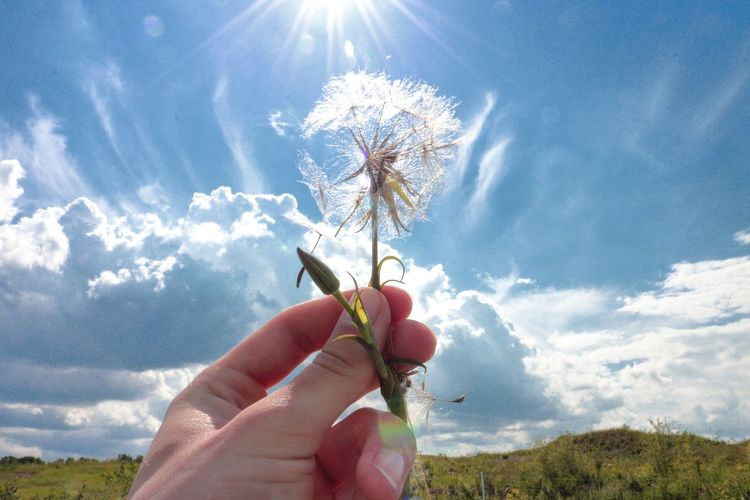 Cropped hand holding dandelion against sky on field