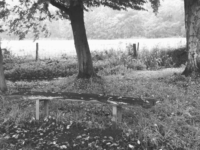 Schwarz-Weiß Blackandwhite Photography Nature On Your Doorstep Lieblingsort Unterwegsunddraußen From My Point Of View