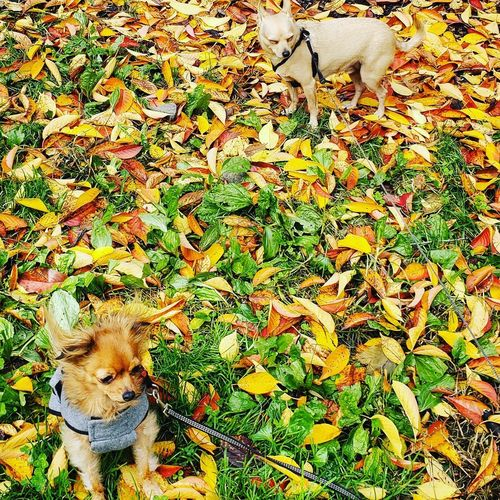 High angle view of dog on field during autumn
