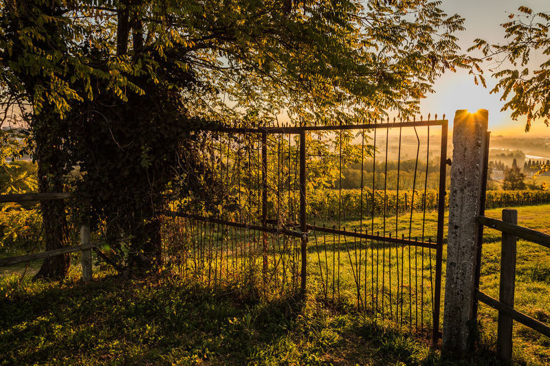 Montréal Treviso Beauty In Nature Day Gate Italy Nature Nervesa No People Outdoors Protection Safety Scenics Security Sky Sunlight Sunset Tranquil Scene Tranquility Tree Veneto