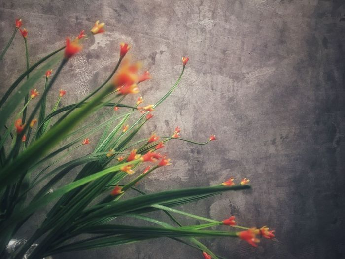 Background Flower Tree Garden Background Texture Background Growth Plant Flowering Plant Flower Nature Red Beauty In Nature Wall - Building Feature Leaf Green Color Orange Color