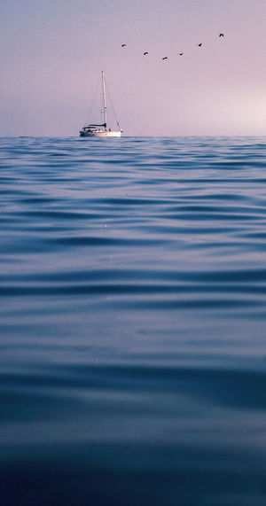 Water Sea Nautical Vessel Transportation Sky Waterfront Beauty In Nature Mode Of Transportation Scenics - Nature Nature Sailboat Tranquility No People Tranquil Scene Vertebrate Animal Themes Animal Wildlife Animal Day Horizon Over Water Outdoors