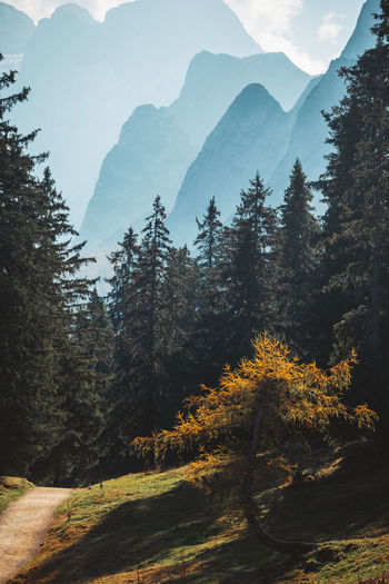 Scenic View Of Trees Against Mountains In Forest