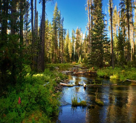 Silent Creek Forest Tree Tranquil Scene Water Tranquility WoodLand Scenics Non-urban Scene Tree Trunk Growth Nature Beauty In Nature Stream Wilderness Wilderness Area Travel Destinations Day Lush Foliage Tourism Vacations