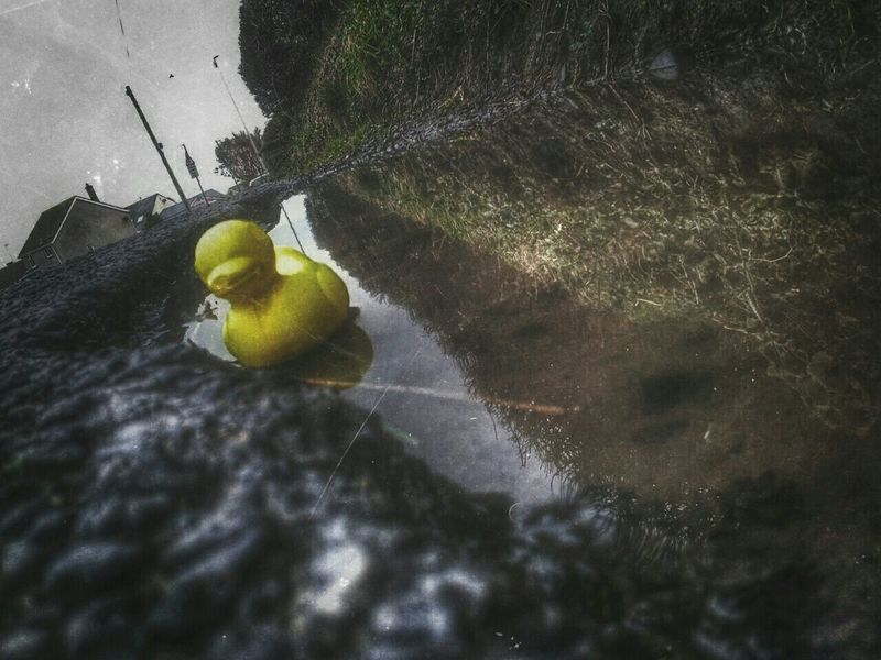 My son's photos today....found a new friend.......I'm Lost... Plastic Duck The World Needs More Yellow Puddleporn Puddleography Reflection_collection Toy Photography Borth, Wales Samsung Galaxy S II  Hdr Edit