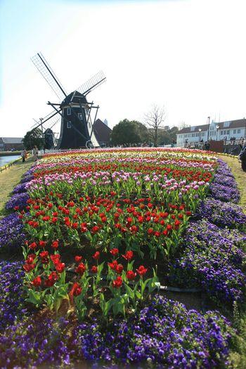 去年のハウステンボス♪ Taking Photos Enjoying Life Hello World Spring Flowers 花 Flowers 春 ハウステンボス