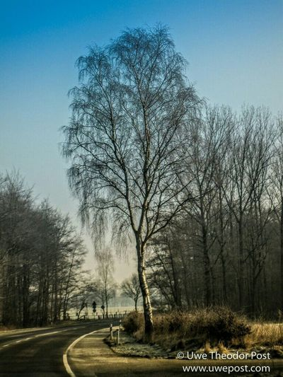 Landstrasse im Winter am Niederrhein . Countryside Landscape Country Road Baum Trees Tree Deutschland Germany Kurve Drivebyphotography Drive By Shooting Drive&shot Country Drive Schreibmalkunst Utpost