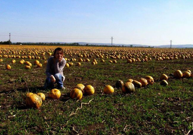 Landscape + That's Me + Pumpkin!Pumpkin! in Austria Burgenland 💜 ?