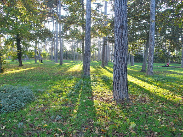 Trees in park