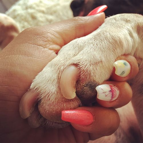 Human Hand Human Finger One Animal Hundepfote Pfote Animal Dog Minibullterrier Minibully Terrier Loveanimals Animallover Benicetoanimals Voiceforthevoiceless Betherevoice
