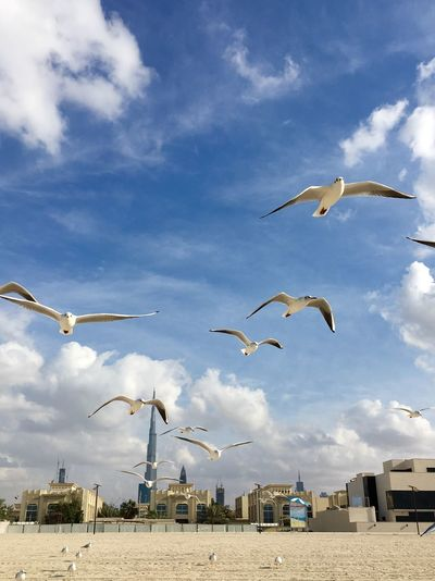Bird Flying Against Cloudy Sky
