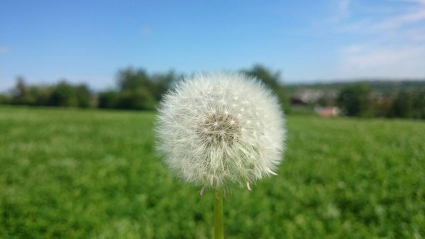 Dandelion Simple Photography Backgrounddefocus Nature Photography Is My Escape From Reality!