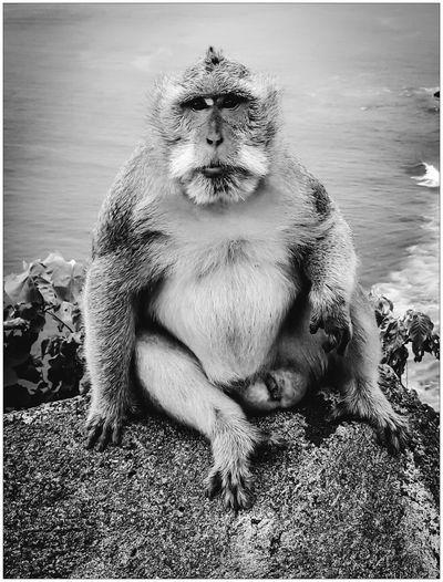 Portrait of monkey on rock against sea