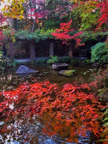 Autumn Leaves Autumn Colors Fall Colors Fall Beauty Colorful Museum Garden Kyoto Japan Japan Photography