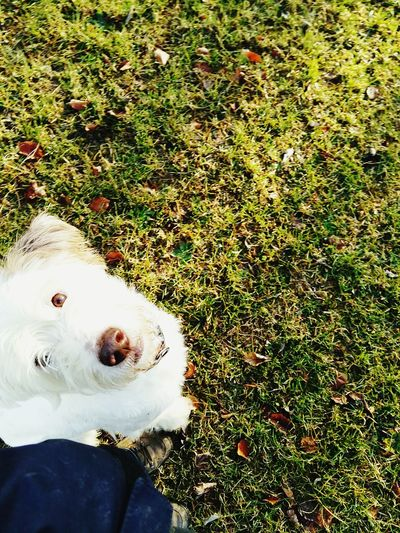 Dog Dog❤ Dogslife Love ♥ Wir Laufen Fuss