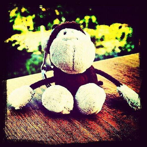 Animal Monkey Toys