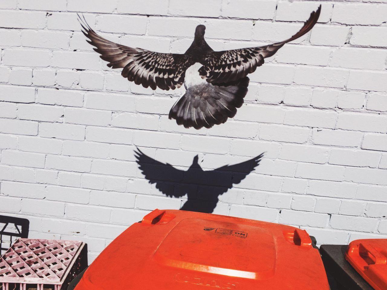 BLACK BIRD FLYING OVER A ZEBRA