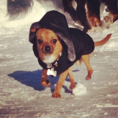 Snow dog Hatinglife Dailyzigga