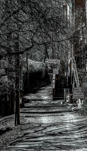 Footpath amidst bare trees and buildings in forest