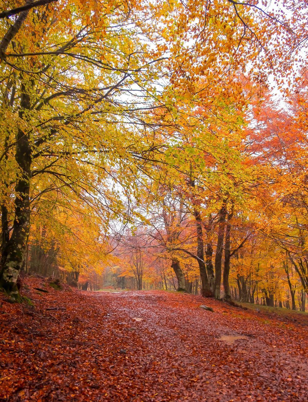 VIEW OF AUTUMNAL TREES BY ROAD