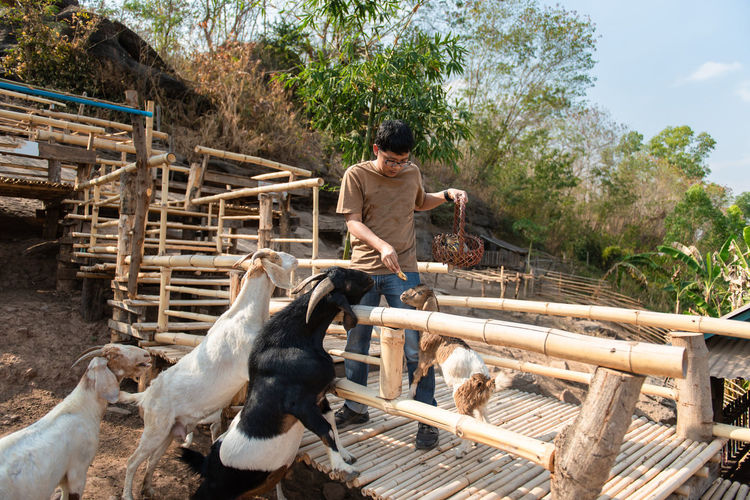 Animal Themes Animal Farm Farm Animal Eating Eating Backgrounds Nature Happy Holiday Enjoy Animals In The Wild Goat Goat Life Goat Eating Goat Farm Goat Feeding Domestic Animals Mammal Domestic Pets Man Men Outdoors Farmer Wood - Material