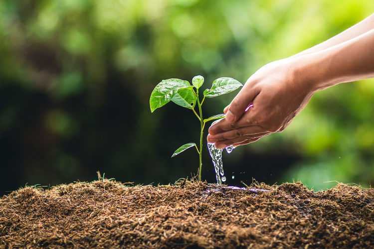 Cropped Hand Of Woman Watering Plant On Field