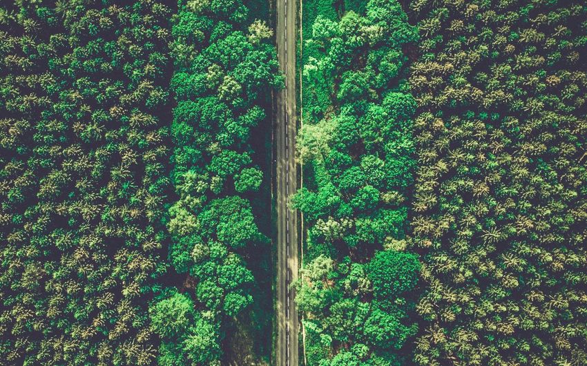 Forest Tree Drone  Aerial View Leaf Backgrounds Full Frame Pattern Agriculture Close-up Grass Green Greenery Countryside Vegetation Woods