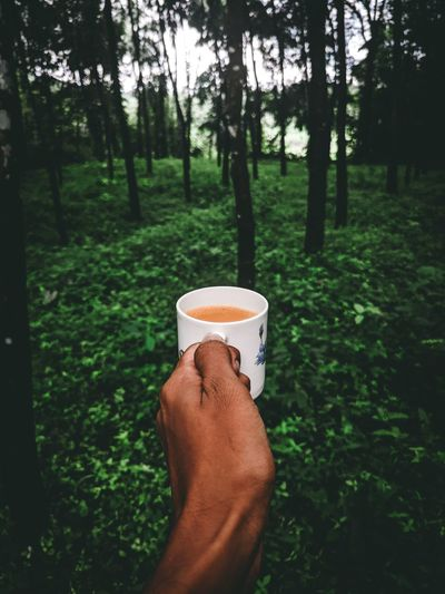 Cropped image of hand holding coffee cup in woods