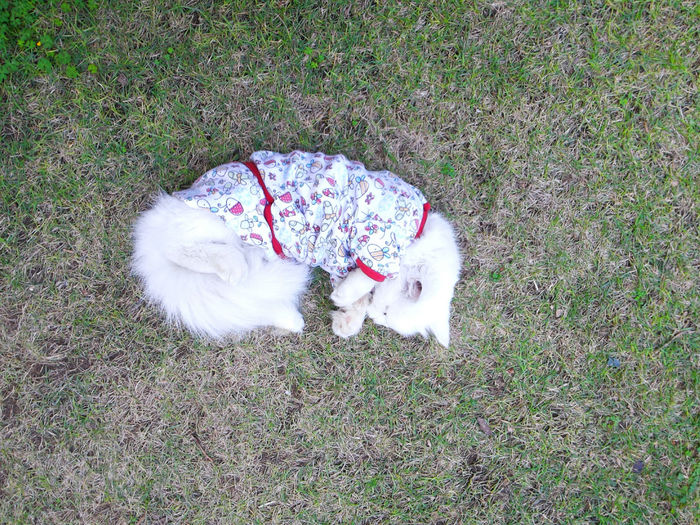 High angle view of dog on grass
