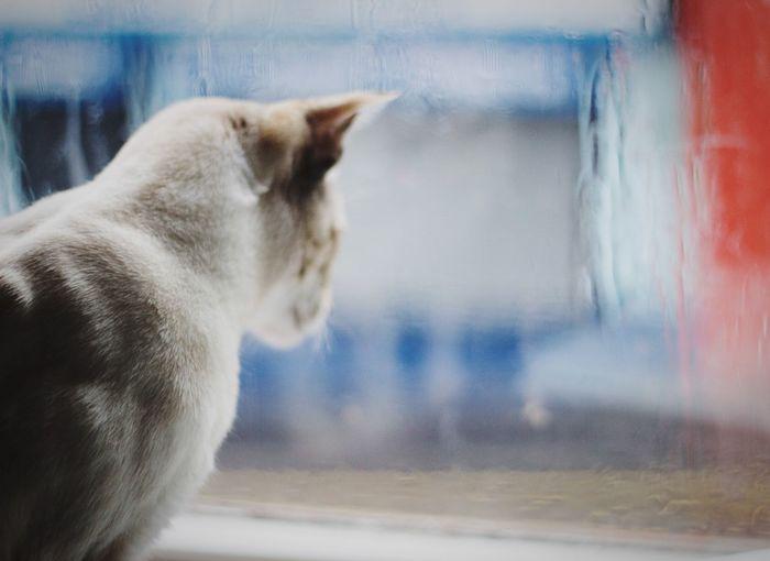 Calla watching
