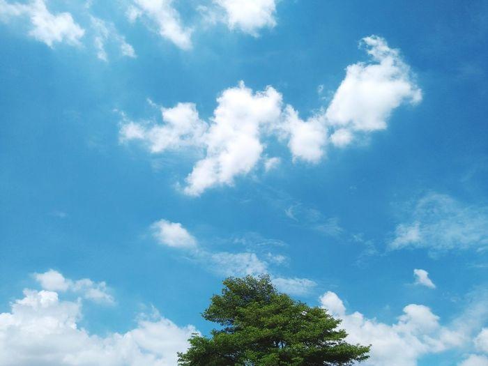 Tree Blue Sky Cloud - Sky Sky Only Wispy Treetop Moonlight Long Shadow - Shadow Cloudscape