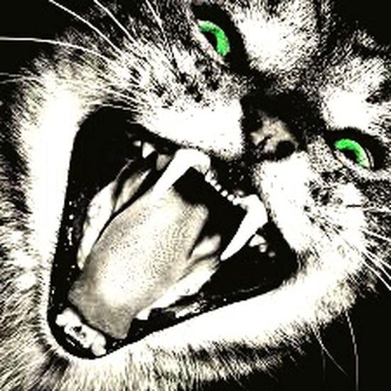 One Animal Pets Animal Themes EyeEm Selects EyeEmNewHere Feline Animal Nature First Eyeem Photo Green