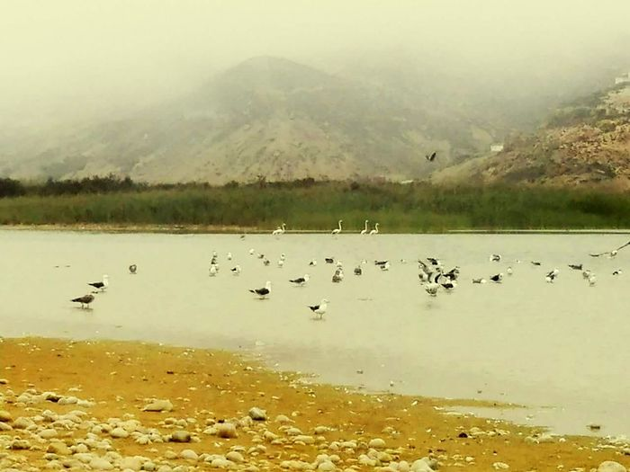 Nice view Animals In The Wild Bird Animal Wildlife Reflection Lake Water No People Flamingo Colony Large Group Of Animals Nature Beauty In Nature Landscape Outdoors Day Animal Themes First Eyeem Photo
