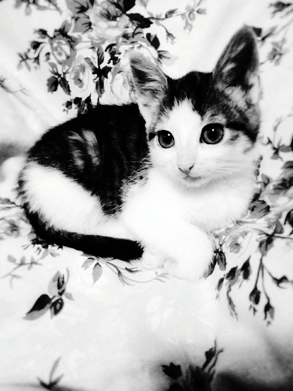 domestic cat, pets, feline, domestic animals, looking at camera, cat, animal themes, mammal, portrait, indoors, whisker, one animal, no people, bed, kitten, close-up, flower, day