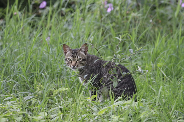 Portrait of cat on grass