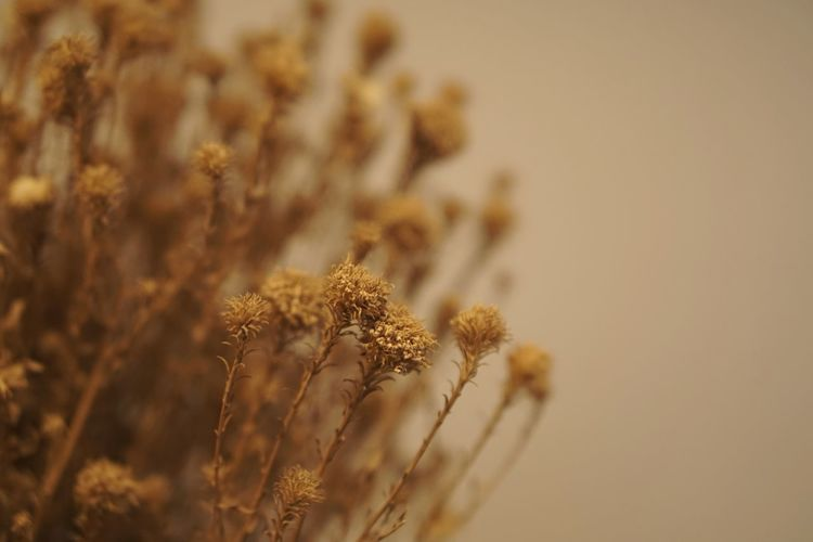 Close-Up Of Dried Flower On Field
