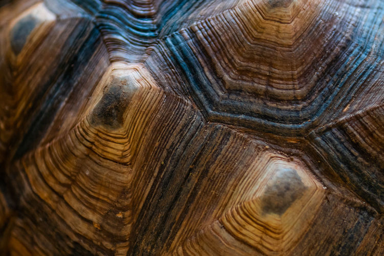 Full frame shot of tortoise shell